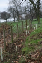 bmx hedge