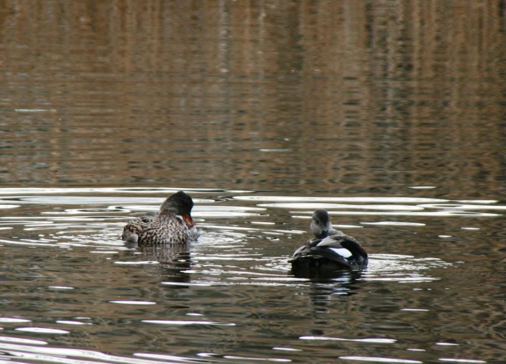 Ducks & ponds update (2/2)