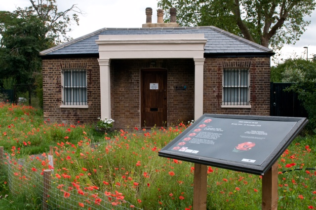 Brockwell poppies-8810