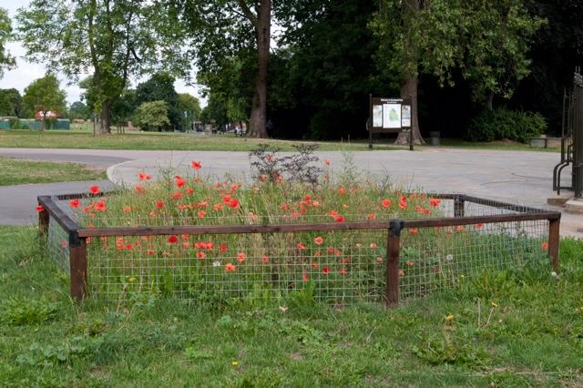 Brockwell Park Poppy Power (3/6)