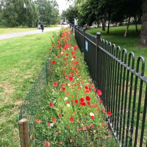 Playground Poppies